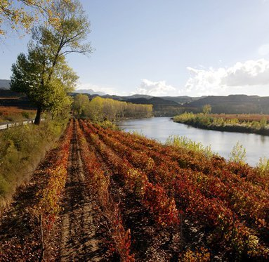 The changing landscape of Rioja Alava