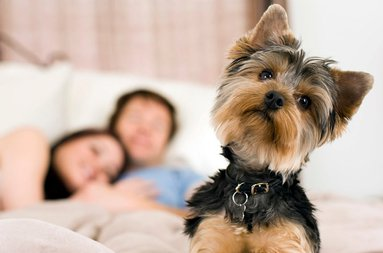 Sercotel Gran Hotel Zurbarán accepts pets. Ask the hotel about ...