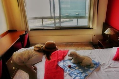 Pets are allowed under availability of the hotel and with ...